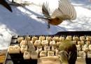 La tastiera per far twittare gli uccelli