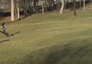 Il video dell'aquila che prova a rapire un bambino