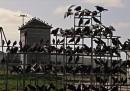 10. Gli Uccelli