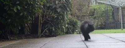 Il video di gattini del Post