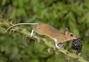 The Mammal Society Mammal Photographer of the Year – 2013