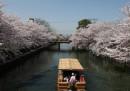 La fioritura dei ciliegi a Kyoto