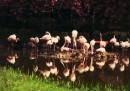 Lo zoo di Amburgo, filtrato - foto