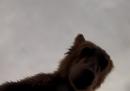Un orso che mangia una telecamera, dal punto di vista della telecamera