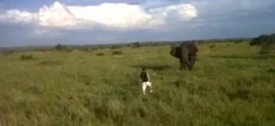 L'uomo che ha chiesto scusa per aver rincorso un elefante