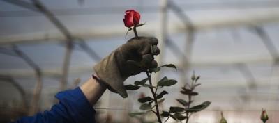 La rosa di Bruno Munari
