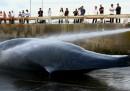 Il Giappone ha chiesto la fine del divieto di cacciare balene