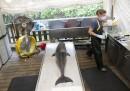 I delfini morti negli Stati Uniti