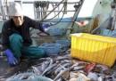 Fukushima, ministro Industria visita centrale: Governo interverrà