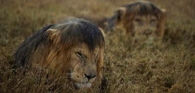 Dieci gran foto di animali