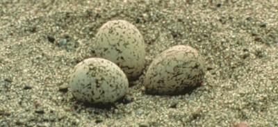I collezionisti di uova di uccelli