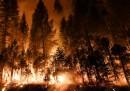 Le foto del Rim Fire
