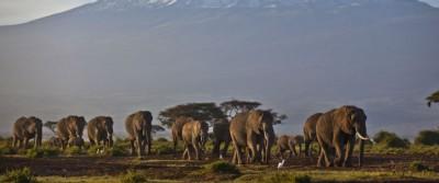 41 elefanti avvelenati in Zimbabwe