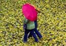 L'autunno degli ombrelli
