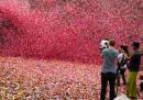 Eruzione di 8 milioni di petali