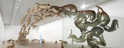 Il branco di lupi in volo in Australia - foto