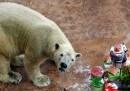 Il compleanno del primo orso polare nato nei Tropici