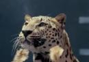 Lo spot di Jaguar che risponde a Mercedes