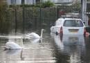 Esondazione del Tami