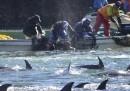 La caccia annuale dei delfini di Taiji