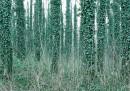 L'estasi del bosco