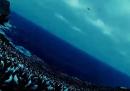 I pinguini, filmati da un rapace