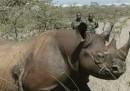 Uccidere rinoceronti per salvare rinoceronti