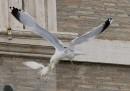 Uccelli attaccano colombe in Vaticano