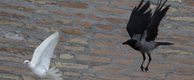 La lotta tra volatili in Vaticano