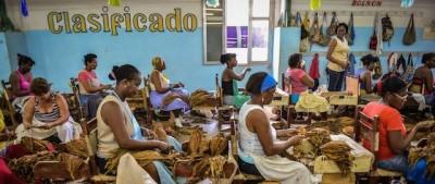 Come si fanno i sigari cubani