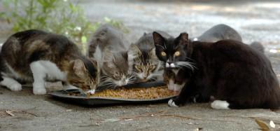 Cosa fare con i gatti randagi?