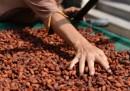 La crisi del cacao