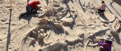 La morte di massa delle balene in Cile