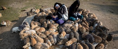 Le foto dell'isola dei conigli in Giappone