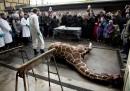 Uccisione giraffa Marius