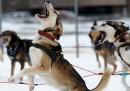 Le foto dell'Iditarod