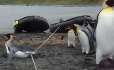 Pinguini che (non) scavalcano una corda