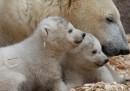 Le foto dei gemelli di orso polare allo zoo di Monaco