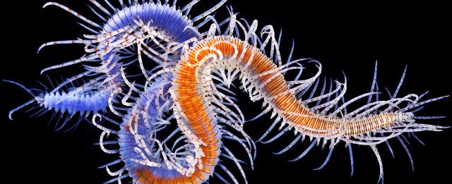 Vermi marini coloratissimi il post for Immagini coralli marini
