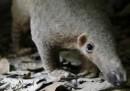 La nuova legge per proteggere gli animali rari in Cina