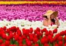 La primavera fotografata
