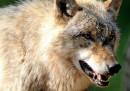 Qual è l'animale che uccide più persone?