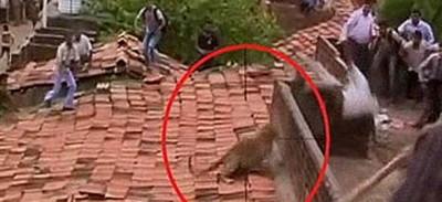 Il video della fuga (e dell'attacco) di un leopardo in India