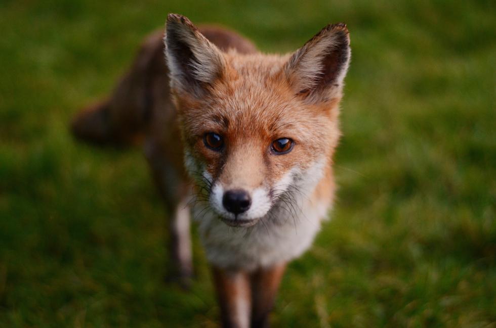 27 bellissime foto di animali il post for Immagini di case bellissime