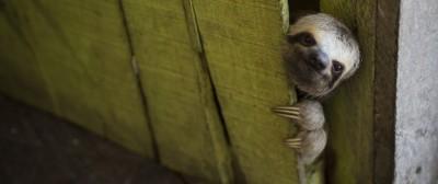 Un bradipo alla porta