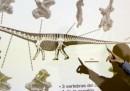 Il dinosauro più grande mai scoperto?