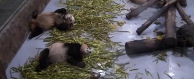 Le più belle webcam di animali