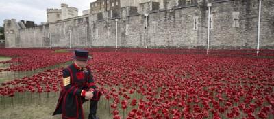 888.246 papaveri per ricordare i soldati morti nella Prima guerra mondiale