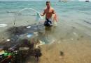 Che fine ha fatto la plastica negli oceani?