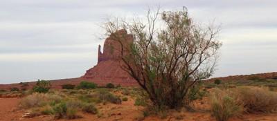 La lotta contro le tamerici in Arizona